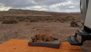 Bugsy sleeping near Capitol Reef