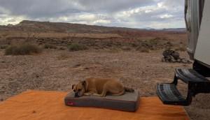 Bugsy sleeping near Capitol Reef