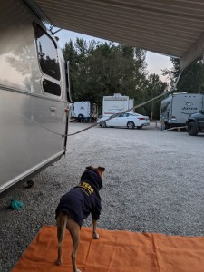Bugsy at the campground in Hamilton