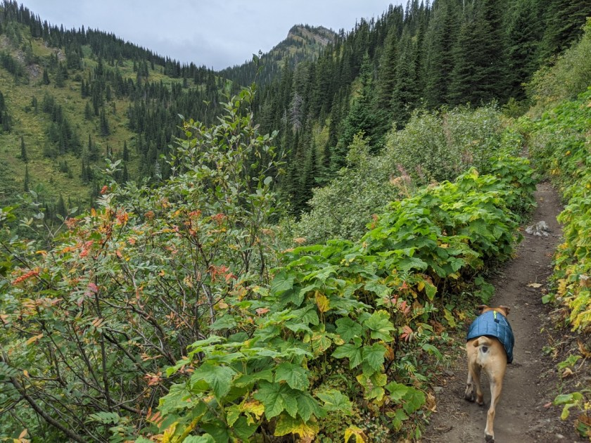 hiking to strawberry lake in flathead national forest