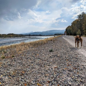 Bugsy strolling the Snake River Dike