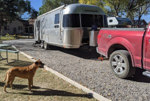 Bugsy and the Airstream at the Montrose KOA
