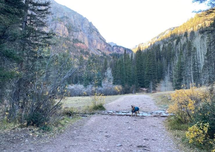 Bugsy hiking to Bear Creek Falls