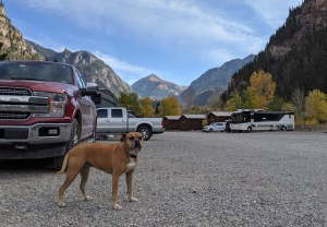 Bugsy at Ouray RV Resort