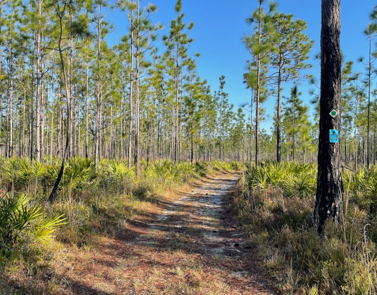 trail in Goethe State Forest