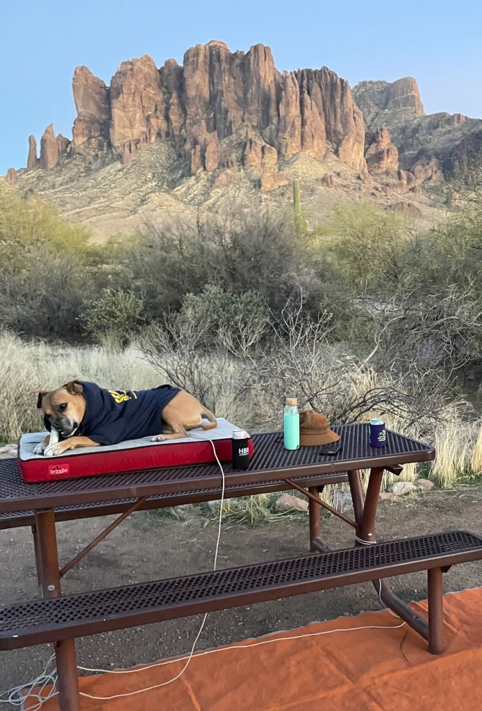 Bugsy at the campsite at Lost Dutchman