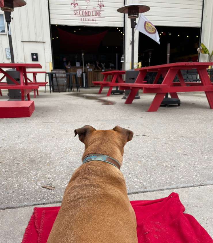 Bugsy at Second Line brewing