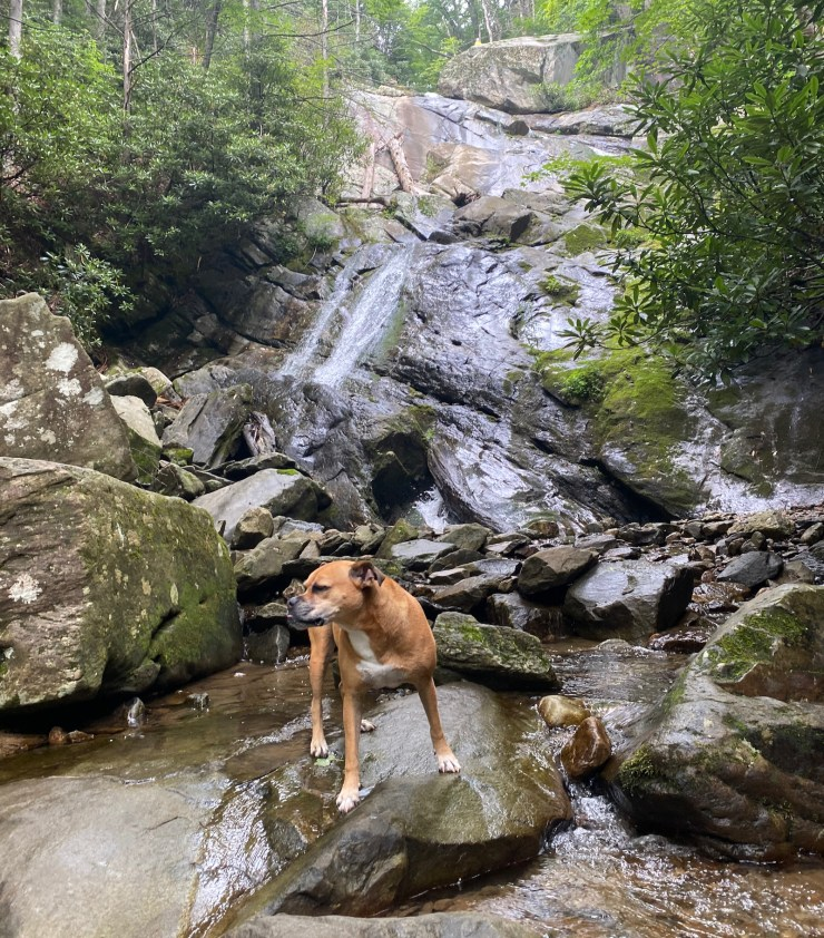 Bugsy at the base of Glen Burney Falls in Blowing Rock