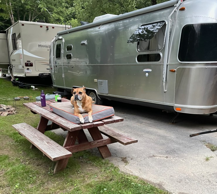Bugsy relaxing by the Airstream in Boone