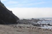 Gulls at Agate Beach