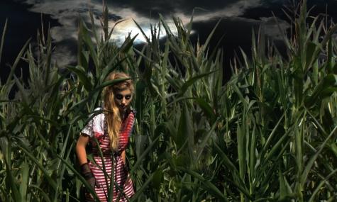 Im Maisfeld erwarten euch die schaurigsten Bewohner