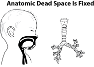 Illustration showing a cross section of a baby's airway airway next to a trachea to demonstrate the concept of anatomic dead space