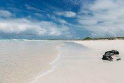 Galapagos-Tortuga-Bay-Turtle-Reserve