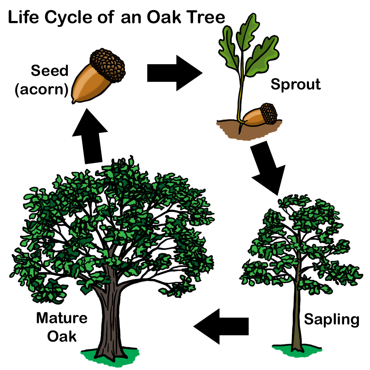 Aisdprekshare Tree Homes Unit Resources