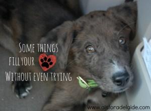 Our adoption story. #pets #PedigreeGives