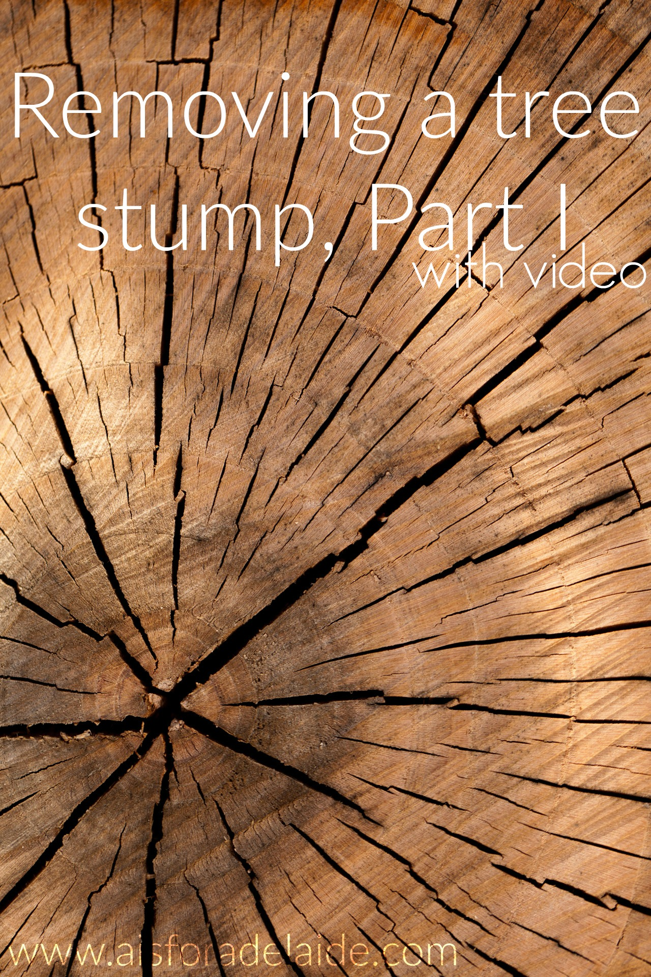 Removing a tree stump: Part 1, with video