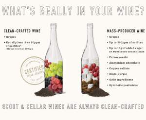 Scout and Cellar Wines