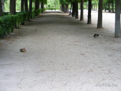 Fauna-Schonbrunn_0011