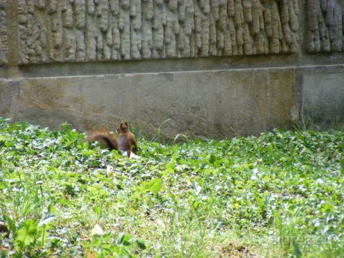 Fauna-Schonbrunn_0019