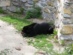 Fauna-Schonbrunn_0059