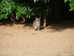 Fauna-Schonbrunn_0110