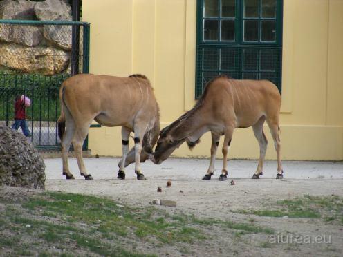 Fauna-Schonbrunn_0124