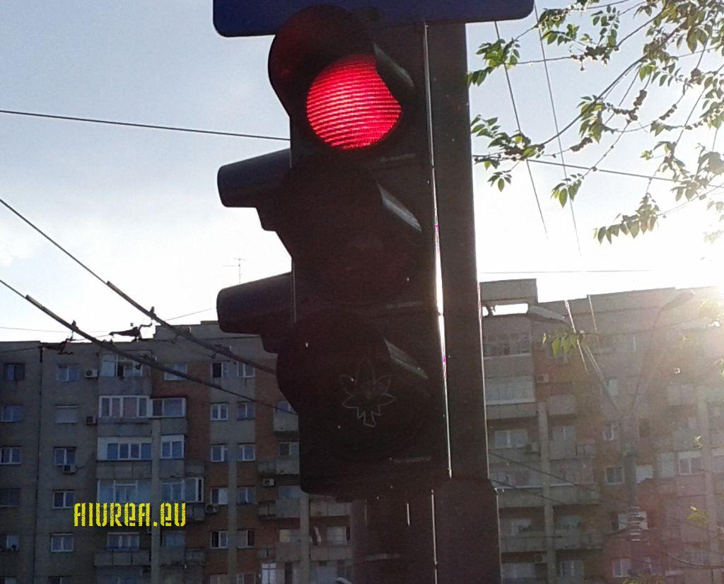 semafor-cannabis-03