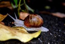 snail-854
