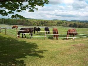 summer-grazing