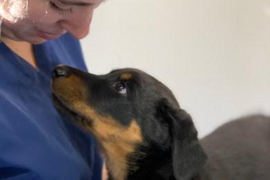 Camille, Auxiliaire Spécialisée Vétérinaire