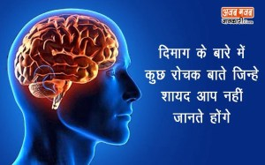 दिमाग और स्मरणशक्ति के बारे में कुछ रोचक बाते, जिन्हे शायद आप नहीं जानते होंगो