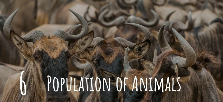 Great population of wild animals in Tanzania