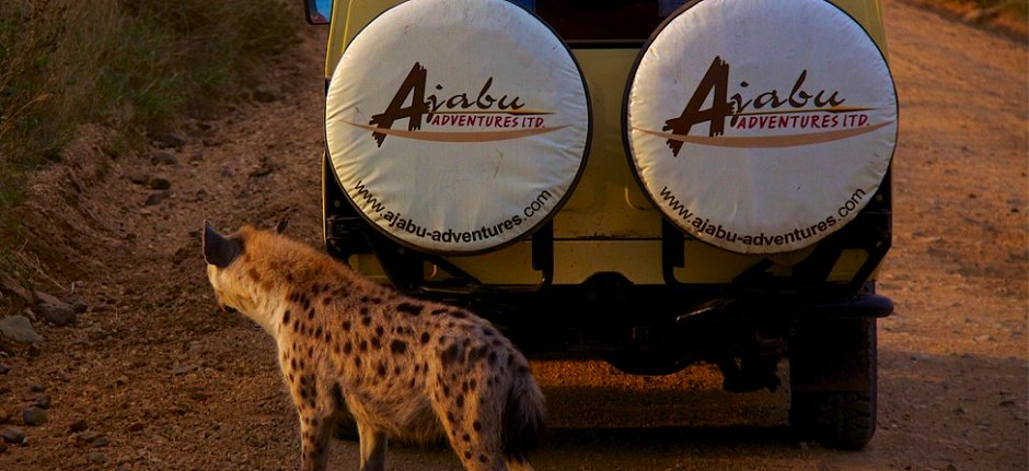 Ajabu Adventures safari vehicle with hyena