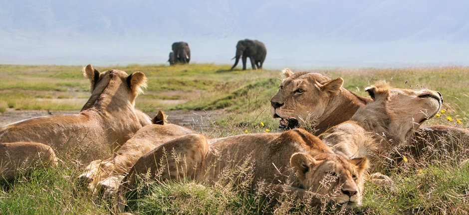 Protection of the Ngorongoro Crater and its lions