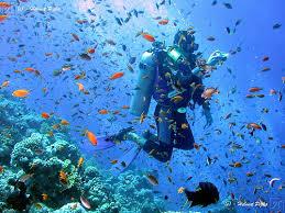 The adventure of Scuba diving in Jamaica