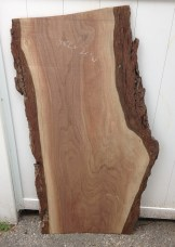 Black Walnut 03