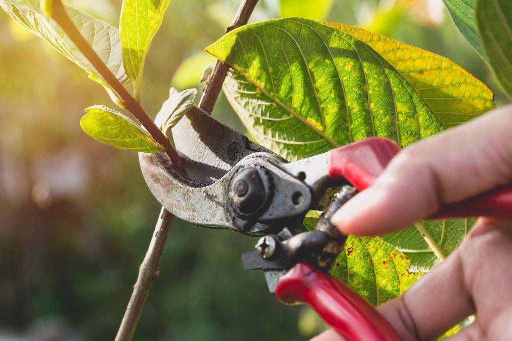 Garden pruner