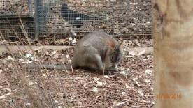Featherdale Wildlife Park Doonside NSW 30 05 2016.1