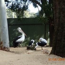 Featherdale Wildlife Park Doonside NSW 30 05 2016.10