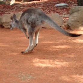 Featherdale Wildlife Park Doonside NSW 30 05 2016.16