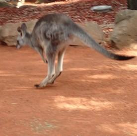 Featherdale Wildlife Park Doonside NSW 30 05 2016.16