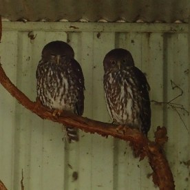 Featherdale Wildlife Park Doonside NSW 30 05 2016.19