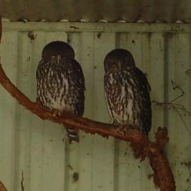 Featherdale Wildlife Park Doonside NSW 30 05 2016.19