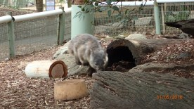 Featherdale Wildlife Park Doonside NSW 30 05 2016.2