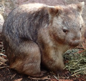 Featherdale Wildlife Park Doonside NSW 30 05 2016.25
