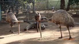 Featherdale Wildlife Park Doonside NSW 30 05 2016.38