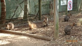 Featherdale Wildlife Park Doonside NSW 30 05 2016.6