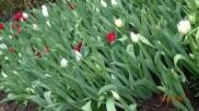 botanic-gar2ndaug162