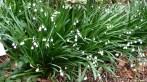 botanic-gar2ndaug166