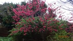 botanic-gar2ndaug168